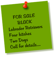 FOR SALE         BLACK Labrador Retrievers Four bitches Two Dogs Call for details....